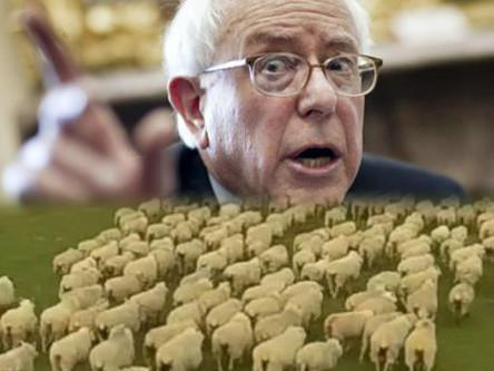 Bernie for sheepdog article